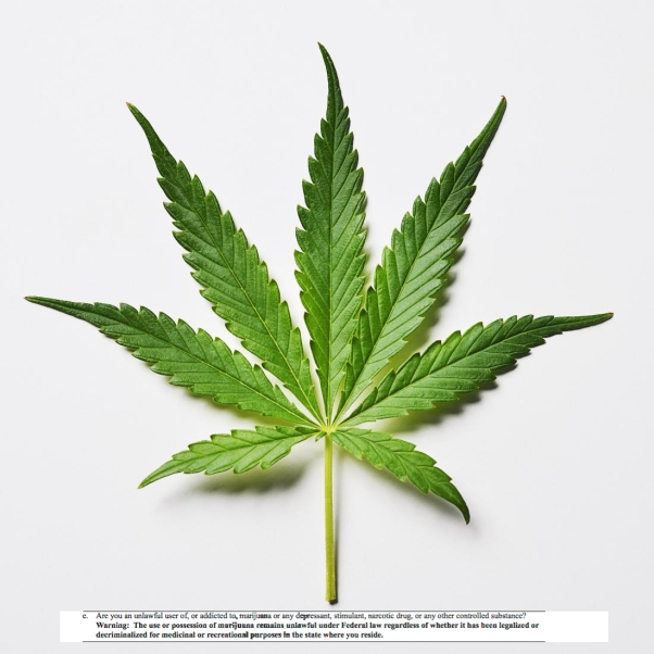 Marijuana leaf on a white background